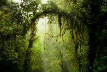 Lugares   Bosques, selvas y otros / by Camila Jáuregui Rangel