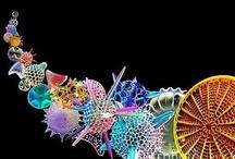 diatoms etc / by A Quezada Duncan