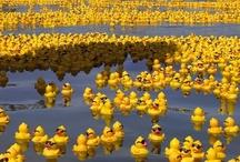 Rubber Duckies / by Ines Dias