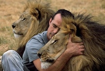 Lion - the King / by Ines Dias