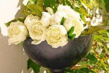 Romantischer Garten / Der romantische Garten lädt zum Genießen und Verweilen ein. Wer ihn betritt, verlässt den Alltag mit dem Schließen des Holztürchens. Romantic Garden/ Cottage Garden / Blumen /Flower