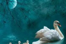 Swan Story / by Francisca Karsono