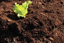 Soil Science / Every good garden starts with the soil, whether you're growing annuals, perennials, vegetables, or ornamentals. There are endless ways to treat your soil right, whether adding amendments or working with the soil food web and microbiome! A huge variety of articles on soil science, all right here.
