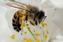 Pollinators / We depend on many garden creatures, large and small, to help pollinate our plants for healthy vegetables, seeds, and propagation - such as bees, hummingbirds, and a surprising list of other critters. Learn all you need to know about your future flower-loving companions here!