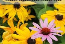 Perennials / Everything you need to know about growing perennials in the garden!