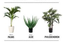 Houseplant Tips / Select the best houseplants for your space and learn all of the tips and tricks to make them flourish here.