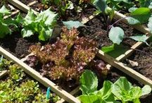 Square Foot Gardening / Square Foot Gardening is an excellent efficient method of gardening management to grow your own produce in a small space. Get all the tips and suggestions you'll need here!