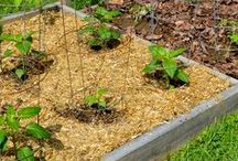Mulching Ideas & Tips / Ah, the magic of mulch - it protects your soil, keeps weeds down, improves soil nutrient and microbiology, retains moisture, and so much more. Learn all you need to know about mulch and the many ways to use it right here.