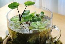 Creative Garden Ideas / A collection of great creative garden ideas to make your garden shine
