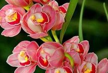 ORCHIDS / ORCHIDS ARE MY FAVORITE FLOWERS.I WOULD LOVE TO HAVE A GARDEN FULL OF ORCIDS.