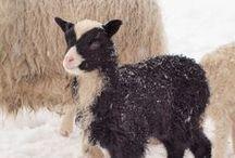 Barns and Barnyards Animals