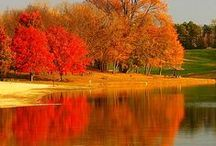 """REFLECTIONS / THIS IS """" WOW """""""
