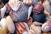 SHELLS / PEARLY SHELLS FROM THE OCEAN, SHINING IN THE SUN COVERING THE SHORE. WHEN I SEE THEM, MY HEART TELLS ME THAT I LOVE YOU, MORE THAN ALL THOSE LITTLE PEARLY SHELLS. / by nellie lacanaria viloria