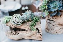 Succulent Wedding / by Vintage Wedding Love
