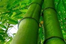 BAMBOO GROVES / FORESTS / by nellie lacanaria viloria