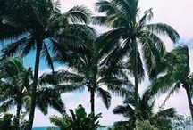PALM TREE FAMILY / by nellie lacanaria viloria