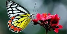 Amazing butterfly's ❤✿✾♕ ♛ ♥️ღ