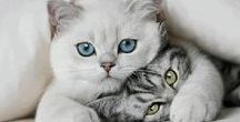 Cats♥️♥️♕ ♛ ツ ღ ☻ ❥ ❣️