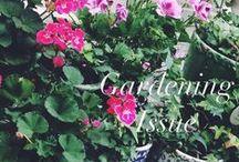 Gardening issue @ AtelierAndaRoman / Rain is good for the garden