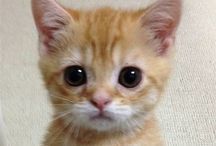 Cute pets <3