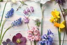 Romantic & Flowers / Romantic & Flowers