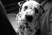 Dogs / Pretty,pretty dogs.
