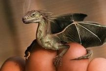Dragon ● Hatchling
