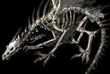 DRAGON ● SKELETAL