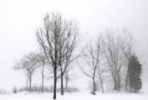 Black & White Photography / Winter Fog No.1