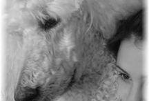 Les grands CANICHES, mes FRISÉS. Les chiens de ma vie. / Tout ce que je trouve sur les caniches, ces frisés que j'adoooore !