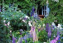Puutarha / Ihania kuvia unelmien puutarhoista, ideoita ja ajatuksia.