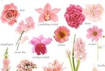 Wedding - Types of Flowers / Which type of flower would you like for your wedding?