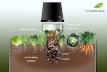 Compost and Worm Farms / by Johannes Petersen