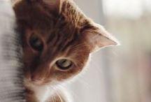TOULOUSE (le chat)