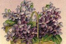 vintage květiny