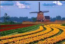 Praktfulla trädgårdar / Magnificent gardens / Det finns många praktfulla trädgårdar på vår jord, både stora och små!