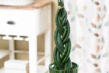 Inomhusgrönska / Indoor greenery  / Inomhusväxter lyser upp ditt hem!