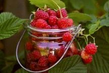 Frukt & Bär / Fruit & Berries / Godsaker som är sprängfyllda med vitaminer!