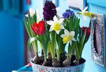 Vårkänslor / Spring feelings / Våren - en härlig årstid då solen åter börjar värma vårt avlånga land och det sakta spricker upp och åter blir grönt!