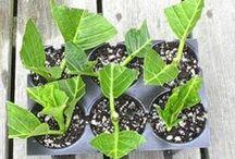 Gröna fingrar / Green thumb / Små enkla tips för dina växter och din trädgård!