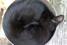 Ontdek je (slaap)plekje - beestenzooi / De gekke plekjes van ons beestenspul