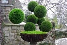 Trädgårdskonst & Formklippta figurer / Garden art & Topiaries / Buxbom, gräs och andra växter som klippts och formats till otroligt vackra kreationer!
