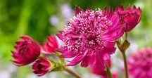 ❀❀❀ Blommor, blommor, blommor / Flowers, flowers, flowers ❀❀❀ / Finns det något vackrare än blommor? Med sina färger och former och ljuvliga dofter tillfredsställer de alla våra sinnen!