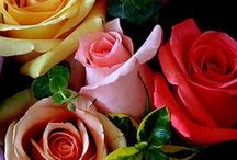 Rosor / Roses / Rosor har odlats i tusentals år för sin skönhet och för sin doft. Rosen är kärlekens blomma ♥