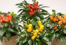 Home & Garden Collection / Till våra speciella tema hör - Home and Garden Kollektion! Vilka växter kommer du att välja för din terrass? Låt oss inspirera dig!