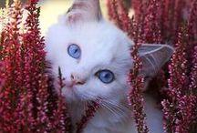 Djur och blommor / Animals and flowers / Finns det något som får en att dra mer på smilbanden än söta bilder på djur... lägg till blommor och det blir oemotståndligt! ♥