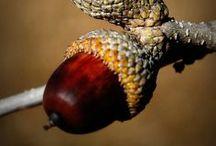 ❦ Höst / Autumn ❦ / Hösten den härliga årstiden när naturen klär sig i underbart varma färger! Finns det någon vackrare årstid...