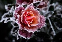 Vinter / Winter / Vinter betyder snö, is och kyla - men det betyder också mycket skoj, man kan bygga snökojor och snögubbar, promenader på soliga kalla dagar är helt ljuvligt, varm choklad och tända ljus! Det är bara att njuta!
