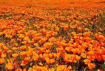 Laranja Alegria / A cor laranja significa alegria, vitalidade, prosperidade e sucesso. É uma cor quente resultado da misturas das cores primárias vermelho e amarelo. Está associada à criatividade, pois o seu uso desperta a mente e auxilia no processo de assimilação de novas ideias uma energia, entusiasmo, comunicação e espontaneidade.  Enfim o laranja é uma das tonalidades que lembra verão, calor, diversão, liberdade e atitudes positivas. VIVA LA VIDA! https://www.youtube.com/watch?v=_cLmu7GuWmc