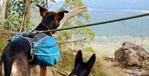 Outdoor Doggies! / Dogs and their best friends OUTDOORS!